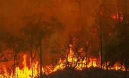 Incendi boschivi: firmata l'ordinanza per prevenirli