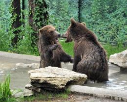 Tre cuccioli di orso salvati: dall'Albania al Bioparco