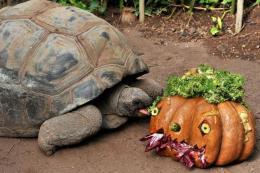 Halloween al Bioparco: riduzioni e tante attività